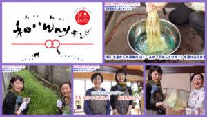 【「カラスノエンドウ」草木染のグラデーションストール完成!】